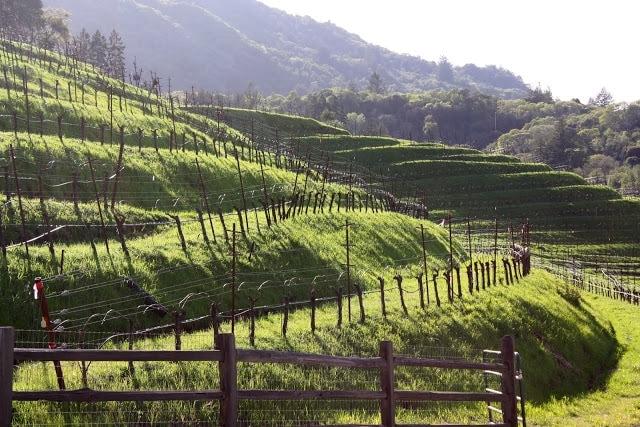 A vineyard in Sonoma Valley