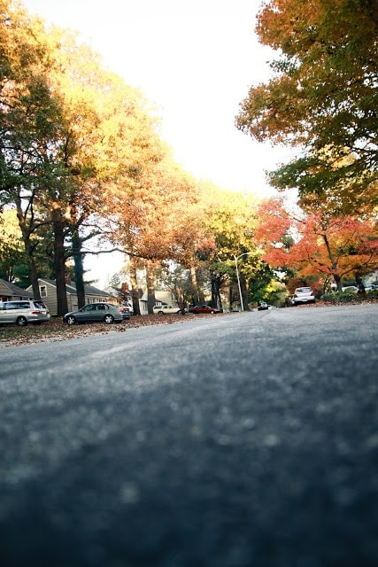 A view of a city street, fall trees with many colors including: yellow, orange, and red.