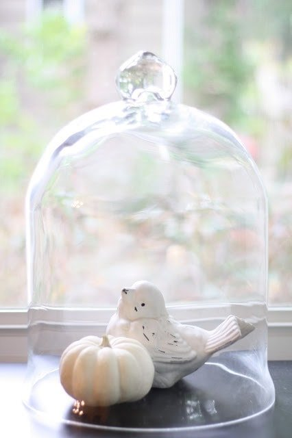 A white pumpkin and white bird under a glass covering.