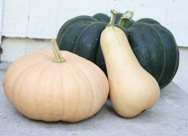 Three gourds, green, orange, and cream colored.