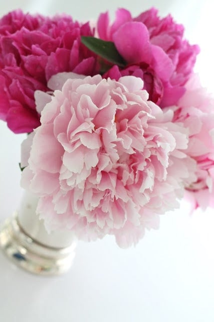 A close up of light and dark pink flowers in a vase.