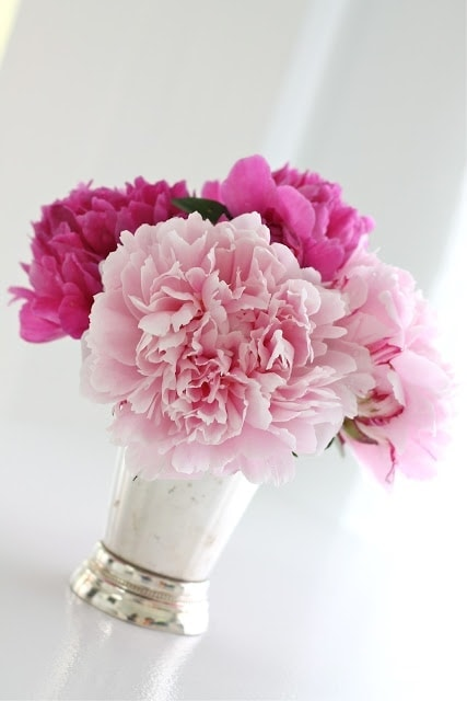 A vase filled with light and dark pink flowers.