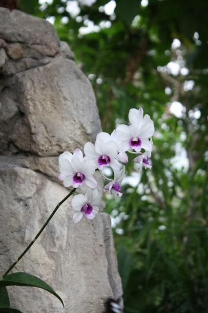 Beautiful white and purple flowers next to stone.