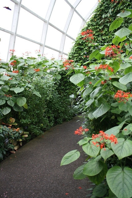 A close up of the path in the butterfly garden