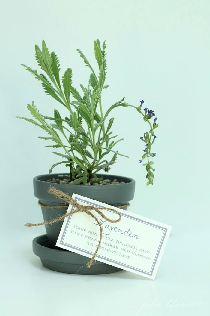 gray lavender pot wrapped with twine with printed tips for growing lavender in pots