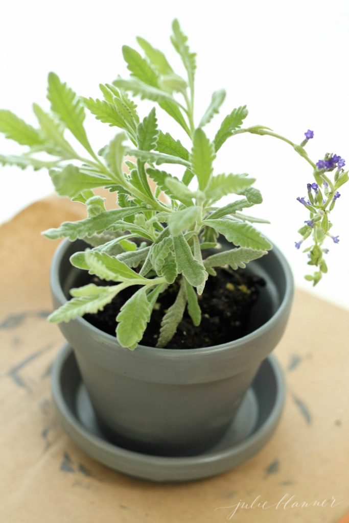 these diy lavender plants are beautiful shower decorations that double as favors