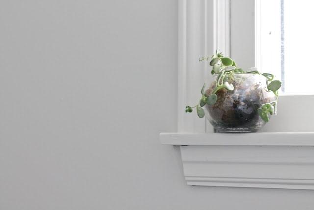 A plant sitting on a window ledge