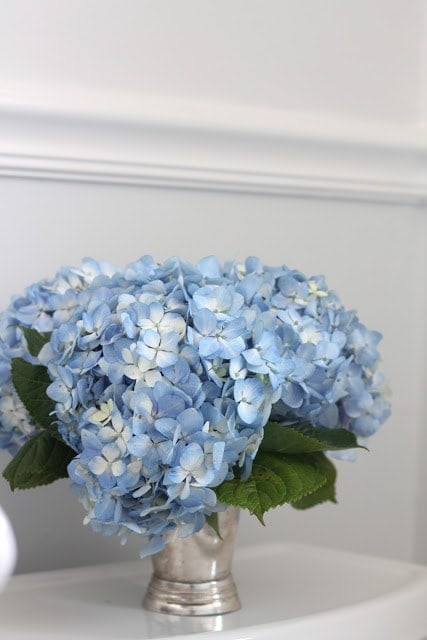 Blue flowers with a white wall behind it