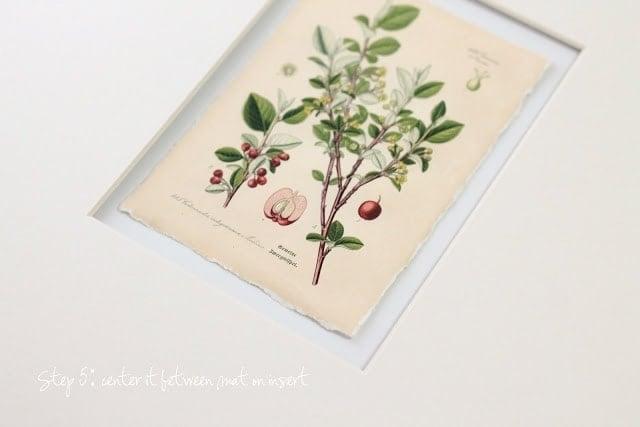 Home Decor Idea - how to make botanical art