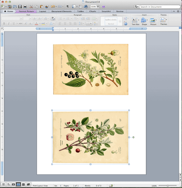 A screenshot of botanical art prints on a computer before printing.
