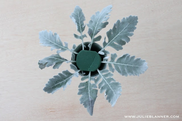 Green leaves in floral foam