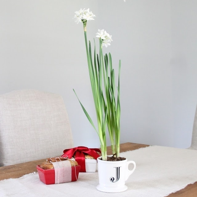 Potted Paperwhites Holiday Hostess Gift