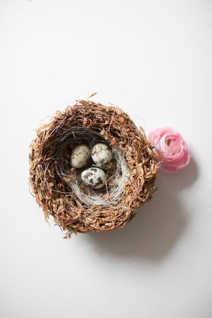 A close up of a nest