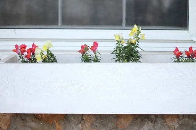 Vases of flowers sitting in front of a window