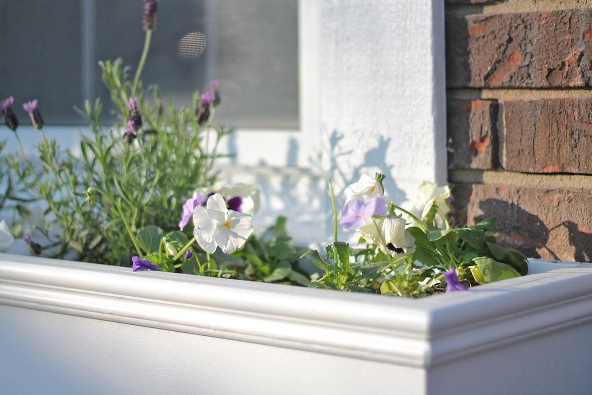 DIY wooden window boxes on the front of a house filled with pansies and lavender