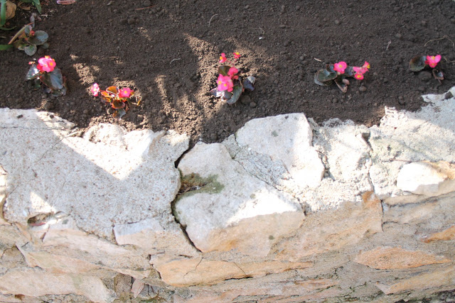 Flowers planted into the ground