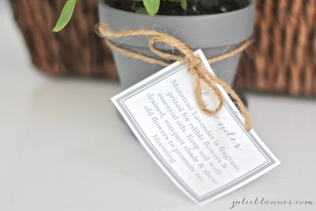 A note about lavender on a lavender plant.