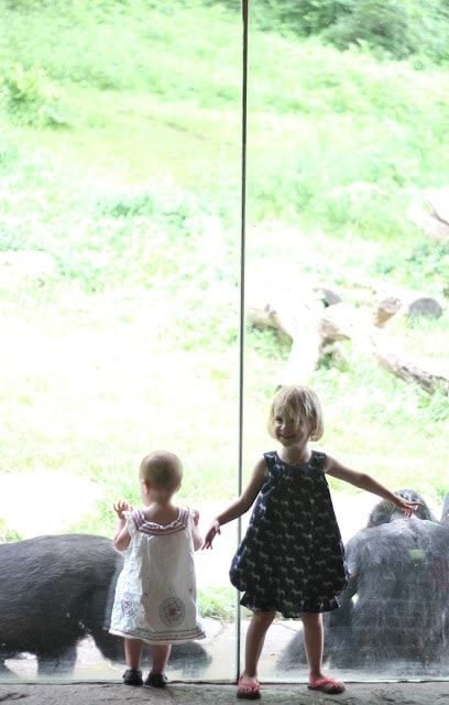 Two little girls looking out a large window at some animals.