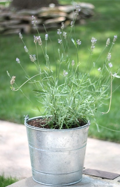 A bucket with a green plant that has small flowers.