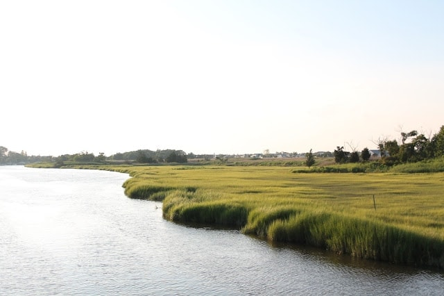 A body of water with long grass on the shore.