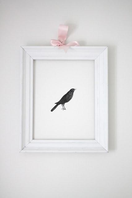 A bird framed on the wall