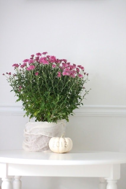 A vase of flowers on a table with a small pumpkin next to it
