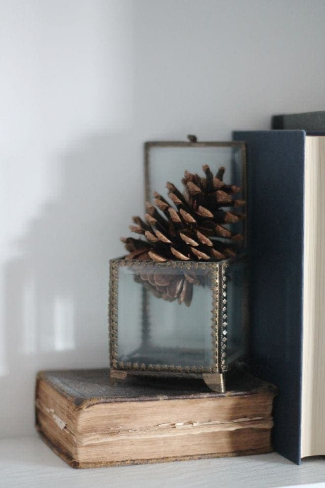 A pinecone in a small glass box for a winter decor element on bookshelves.