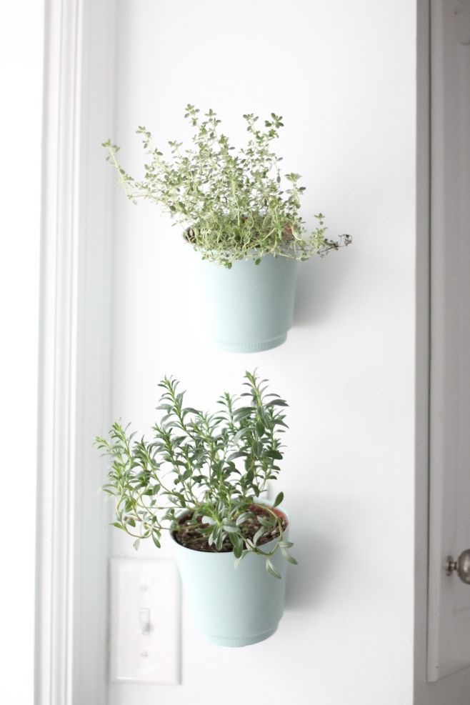 hanging wall planters in a kitchen