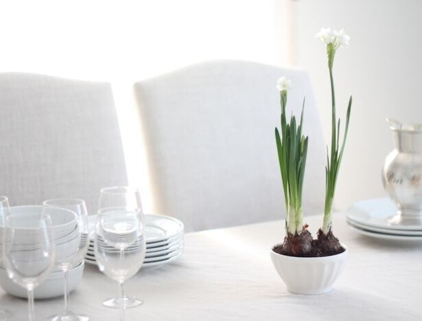 white everyday dishes