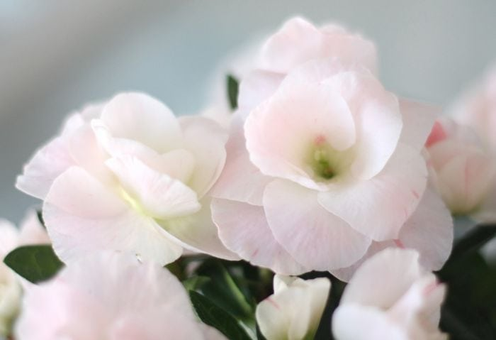 secret tip to arrange flowers - last minute via julieblanner.com