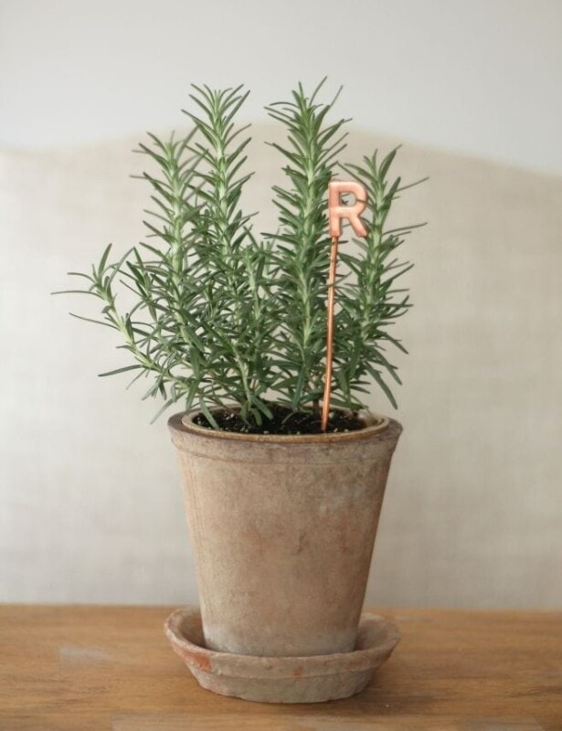 hostess gift plant with copper marker