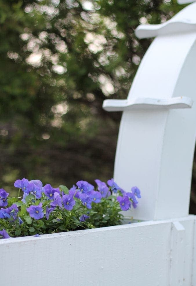 flowers-in-fence