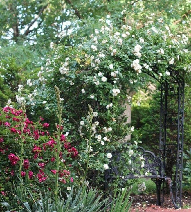 Ideas & tips for a low maintenance garden