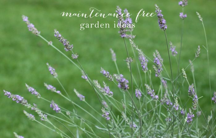 http://julieblanner.com/wp-content/uploads/2014/06/maintenance-free-garden-ideas.jpg