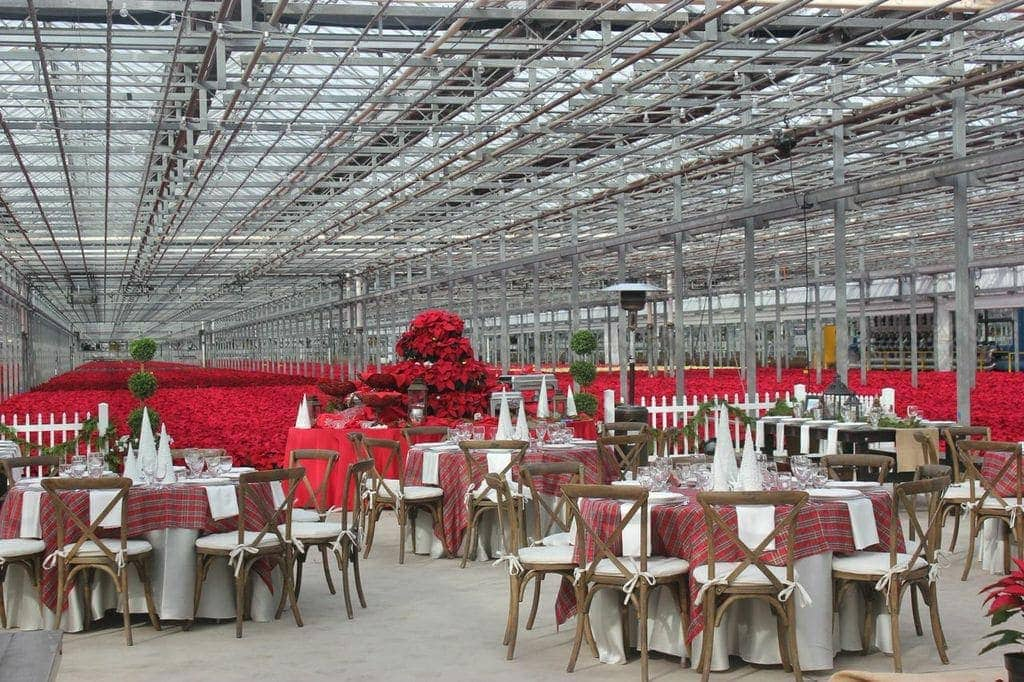 Gorgeous Christmas party - plaid, poinsettias & topiaries