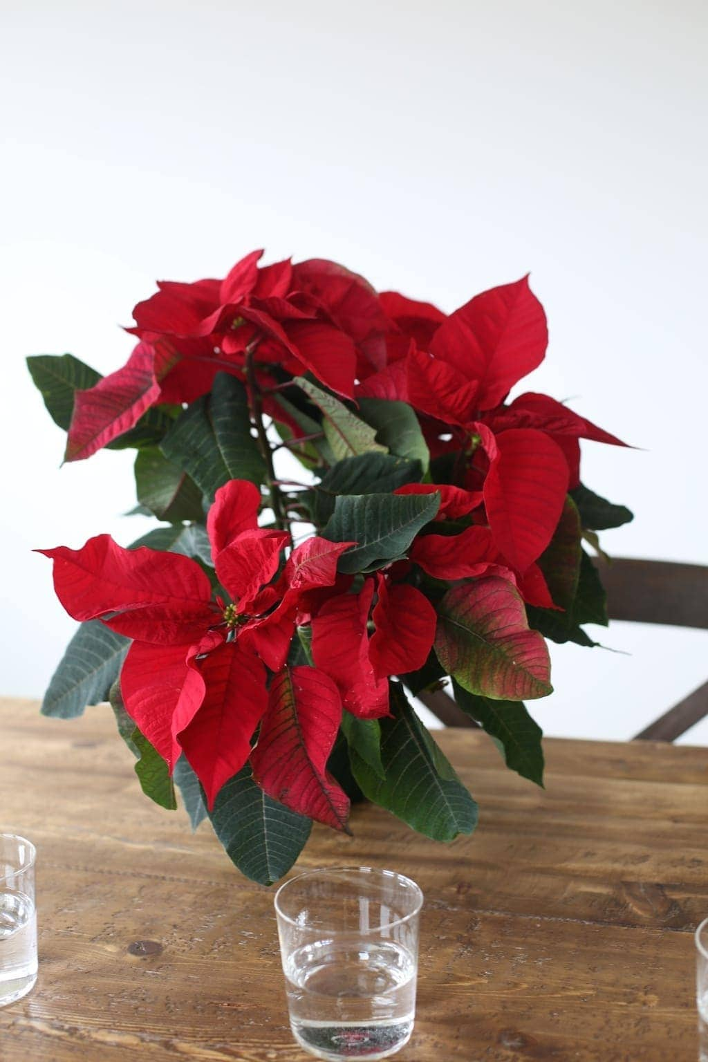 Get the recipe to create a gorgeous poinsettia centerpiece for just $5!