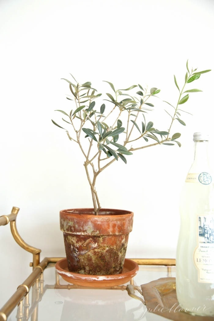 An easy care houseplant potted in a terra cotta pot, on a brass and glass bar cart.