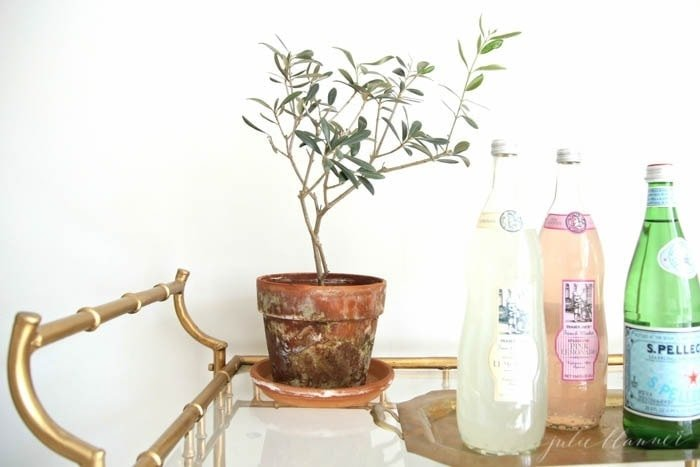 4 easy & beautiful houseplants that will add life to your home
