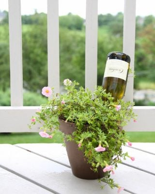 How to water plants while you're out of town | wine bottle self watering system