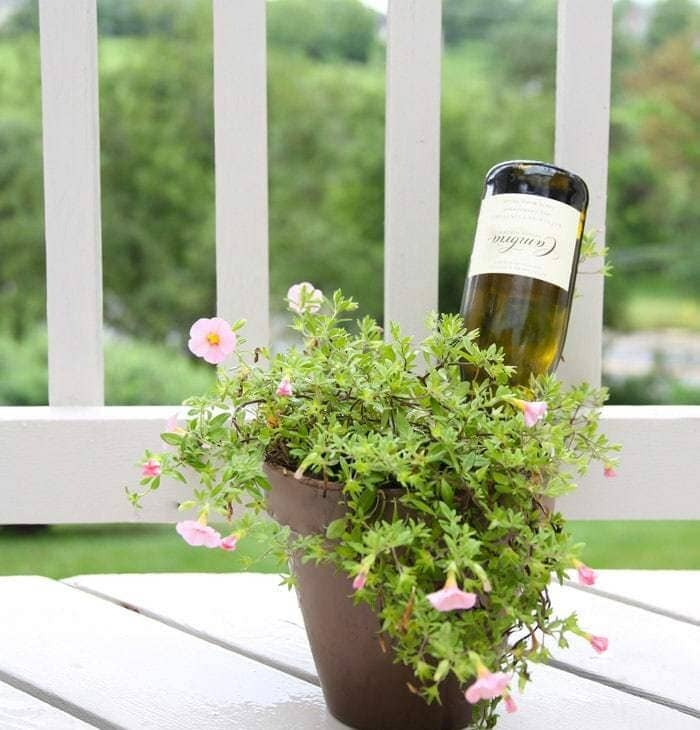 How to water plants while you're out of town   wine bottle self watering system