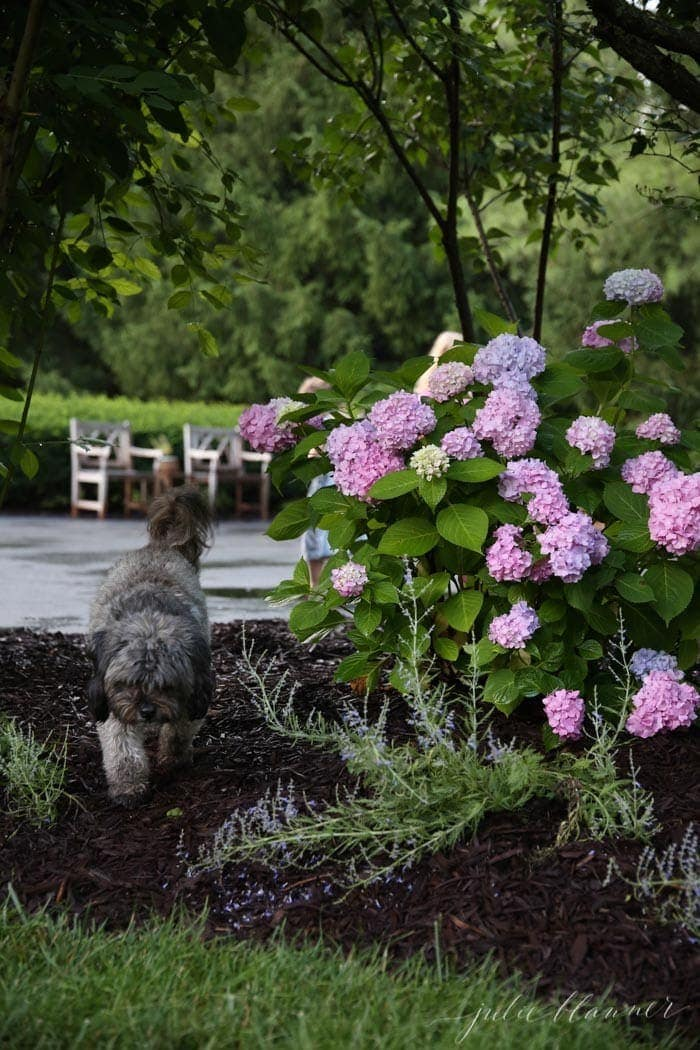 Our Landscaping Plan and Landscaping Tips from a Designer