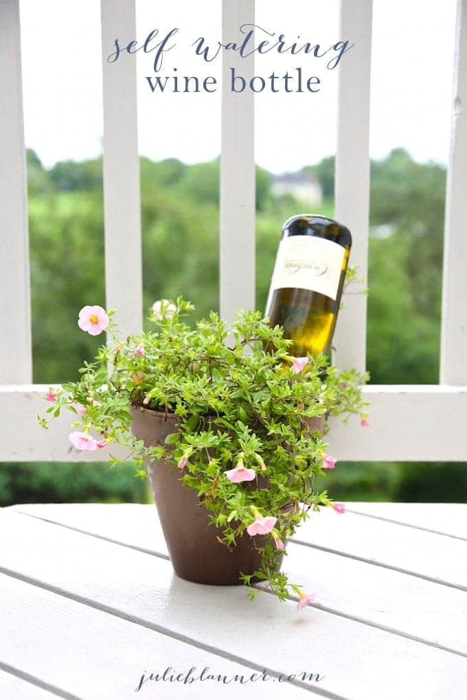 How To Water Plants While Away Self Watering Wine Bottle