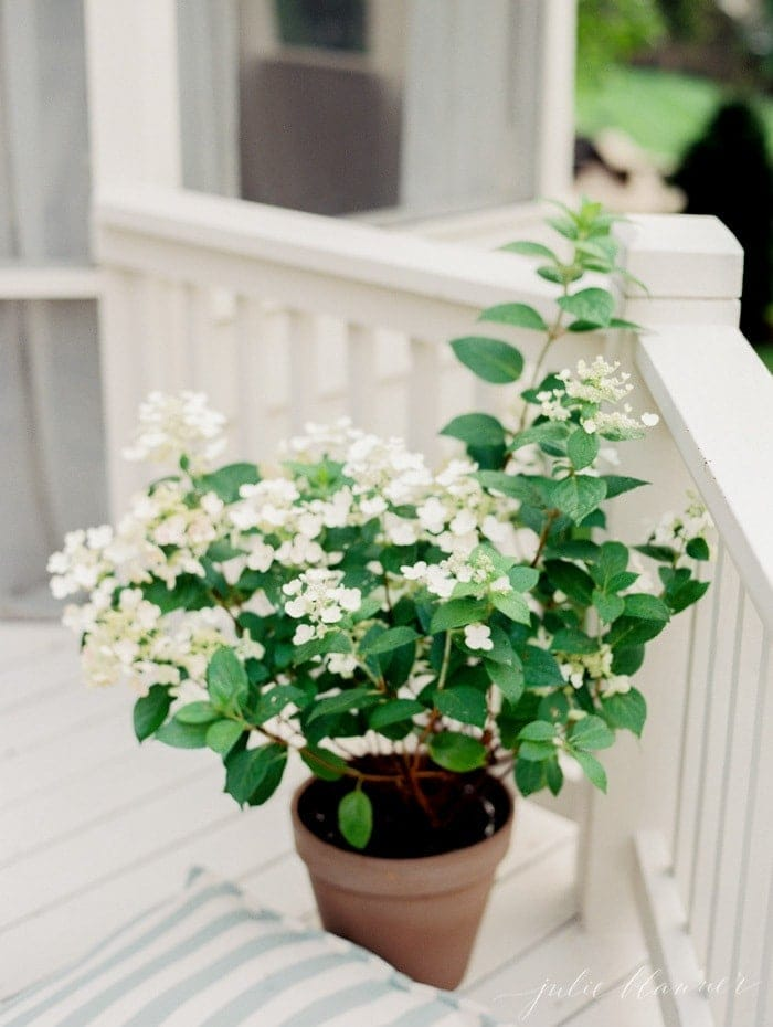 A white deck outdoor living room space with a potted hydrangea.