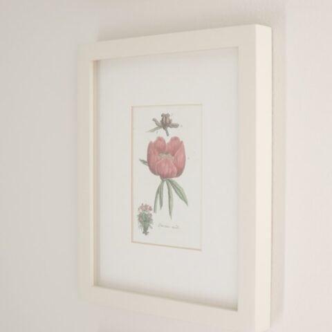 Botanical print in white frame