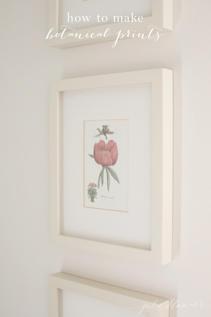 Reader Question: Botanical Prints