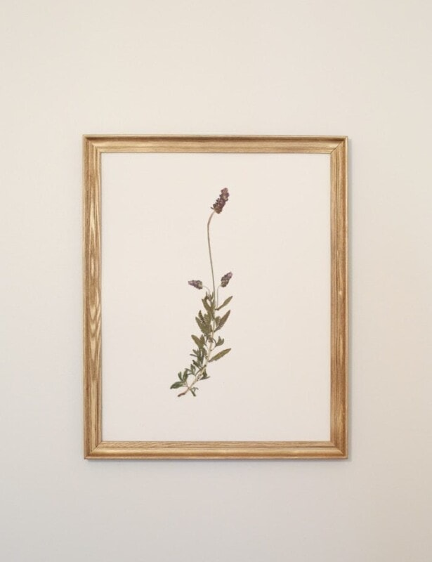Beautiful DIY pressed botanical wall art