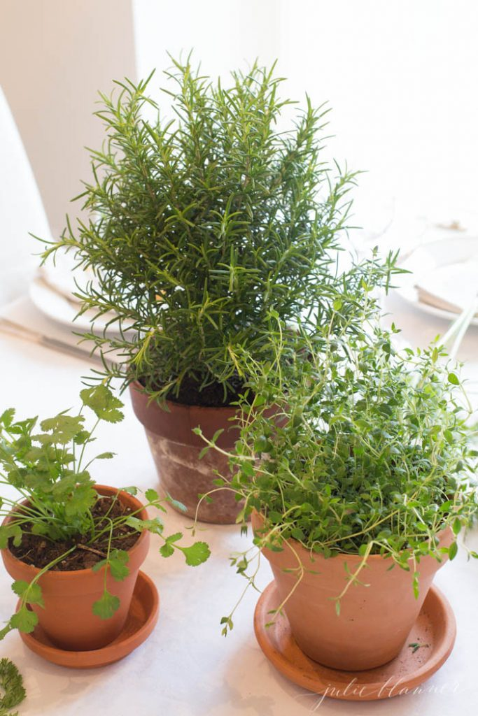 entertaining ideas - repurpose plants as centerpieces
