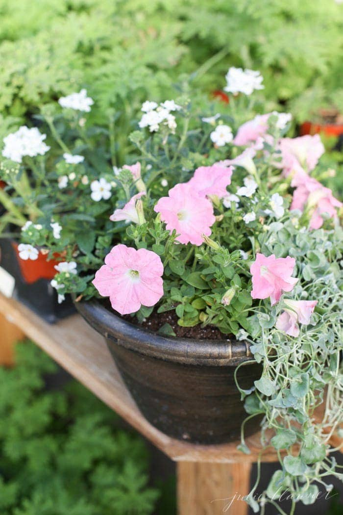 A garden container filled with pink and white blooming annuals
