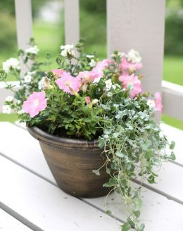 how to create a potted garden that will bloom all summer long