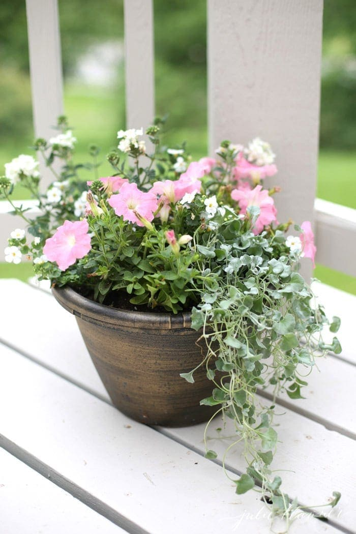 A garden container full of pink and white annuals on a white deck.